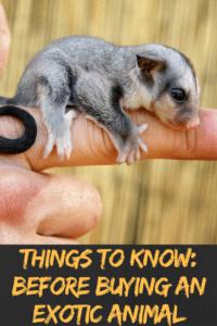 buying an exotic animal myexoticworld.com
