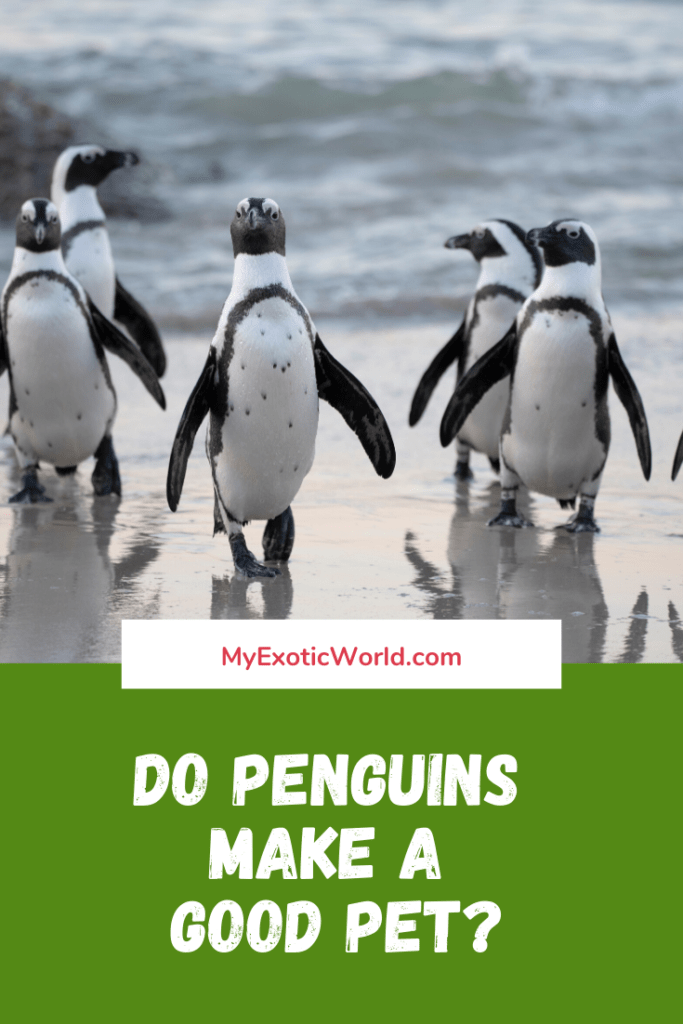 Why Penguins as pets