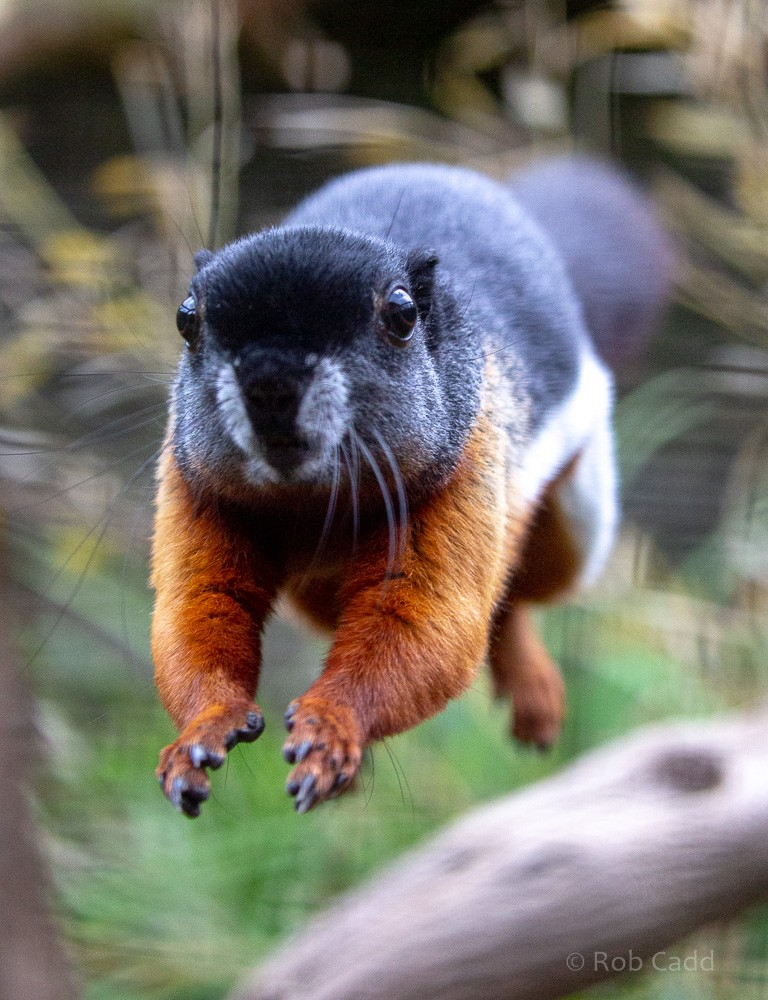 Prevost Squirrel Fun Facts and Pet Care tips!